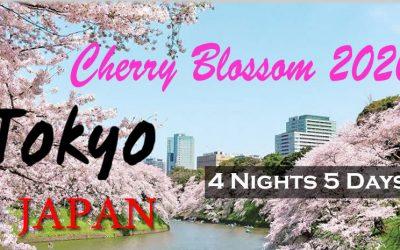 Cherry Bossom 2020 5D4N in TOKYO