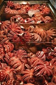 tokyo-tsukiji-octopus